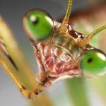 カマキリの目が夜になったら黒目になっているのはなぜ?カマキリ独特の複眼の構造で黒くなる!