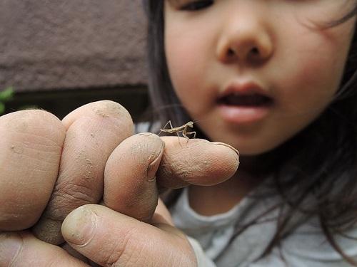 ヒナカマキリ 小さい
